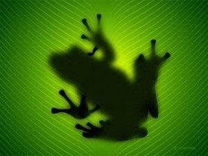 frog_1024x768